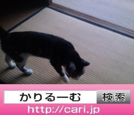 2016/08/10(17:31:49) 猫S 畳
