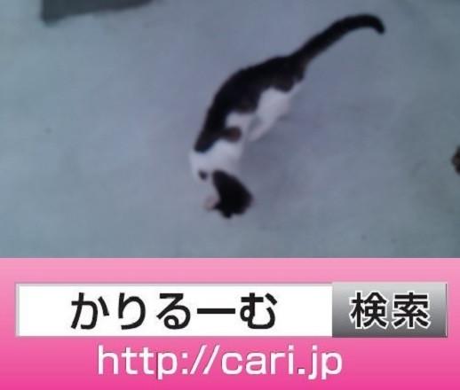2016/08/28(13:29:28)写真 猫H