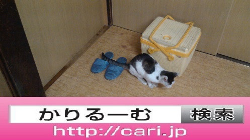 2016/08/28(14:04:40)写真 猫Hとかご