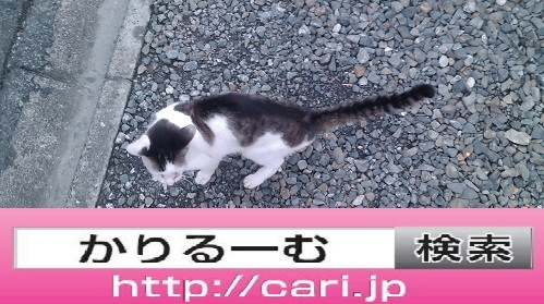 2016/08/28(13:59:25)写真 猫H