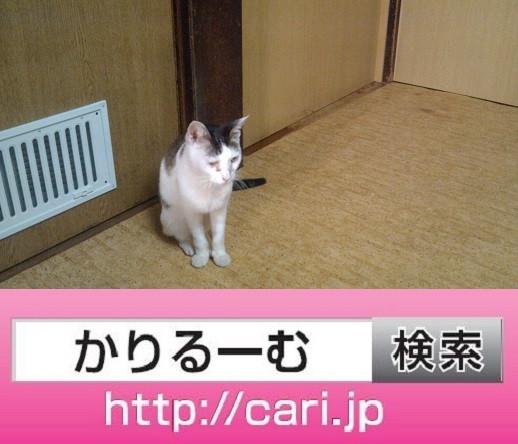 2016/09中旬・歴史・160831165343猫H