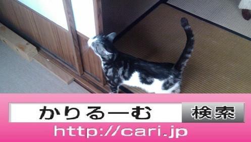 2016/08/29(13:52:55)写真 猫S