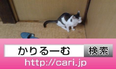2016/08/30(14:07:59)写真 猫H