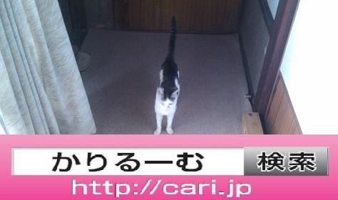 2016/08/29(13:48:30)写真 猫H