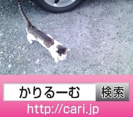 2016/09/04(14:39:22)写真 猫H