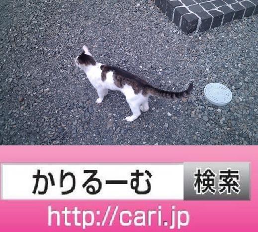 2016/09/04(14:41:17)写真 猫H