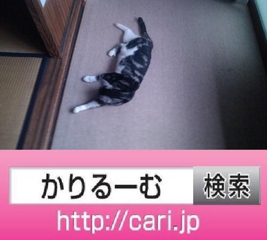 2016/08/10(17:39:34)写真 猫S