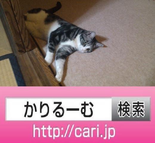 2016/08/13(19:09:01)写真 猫S