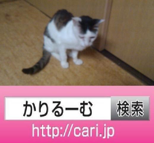 2016/09/08(16:57:29)写真 猫H
