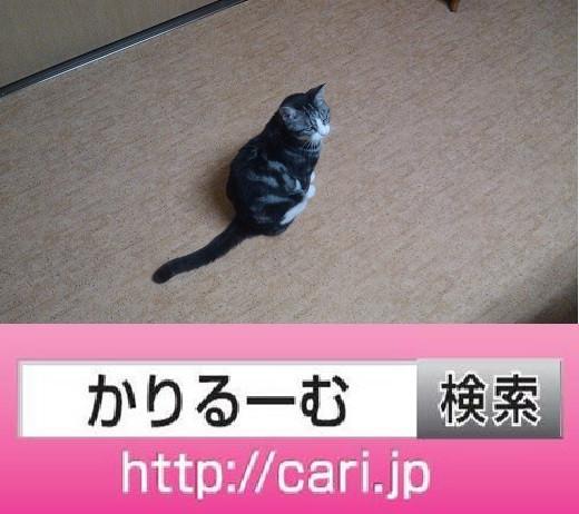 2016/09/10(15:18:18)写真 猫S