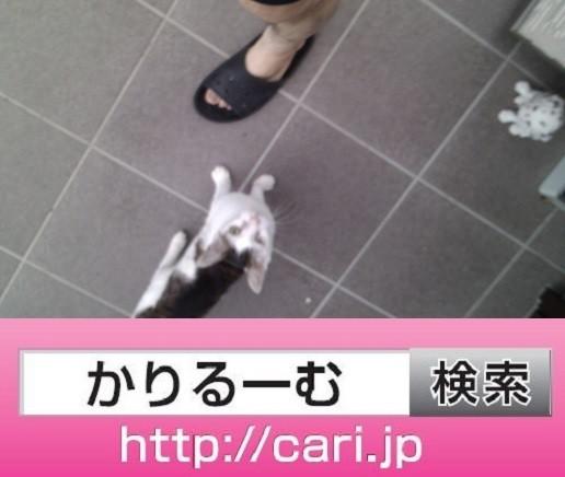 2016/09/18(16:42:59)写真 猫H