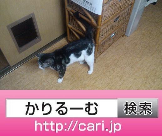 2016/09/25(12:55:14)写真 猫S
