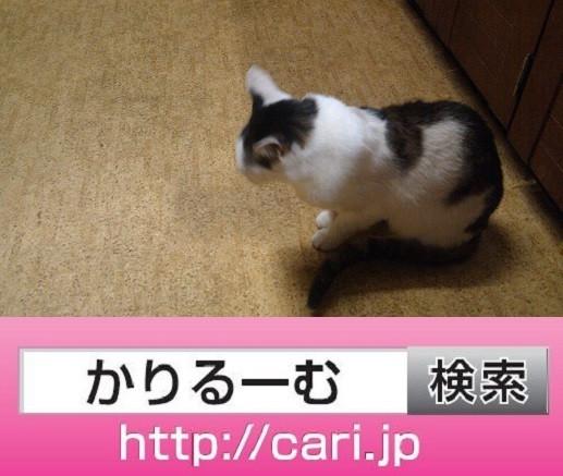 2016/09/28(16:40:37)写真 猫H