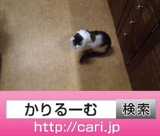 2016/09/28(16:40:31)写真 猫H