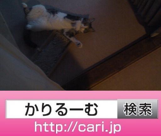2016/09/27(17:42:17)写真 猫S