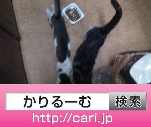 2016/09/29(19:52:13)写真 猫