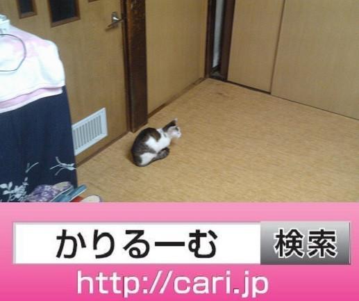2016/09/15(16:45:48)写真 猫H