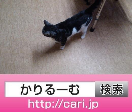 2016/09/21(17:04:01)写真 猫S