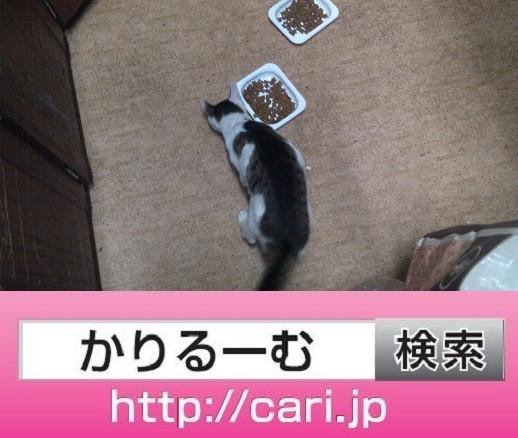 2016/09/29(19:52:19)写真 猫H