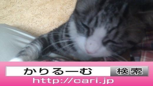 2016/11/16(19:34:05) 写真 猫S