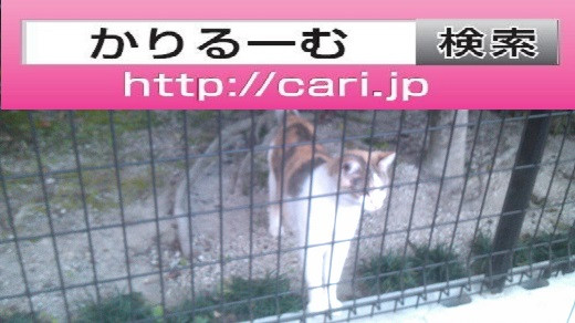 2016/11/05(16:32:27)写真 猫