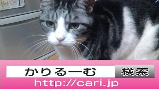 2016/11/02(19:26:30)写真 猫S