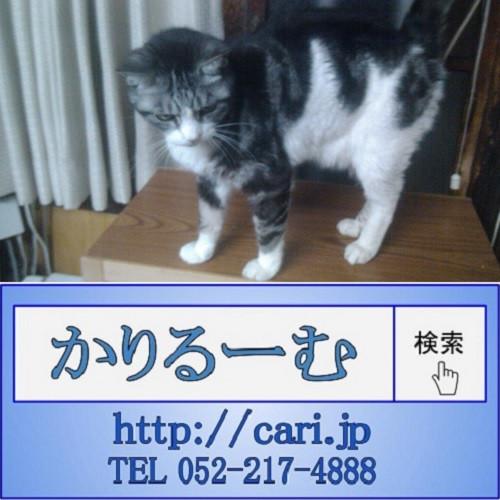 2017/04/09(19:32:00)撮影写真 猫S