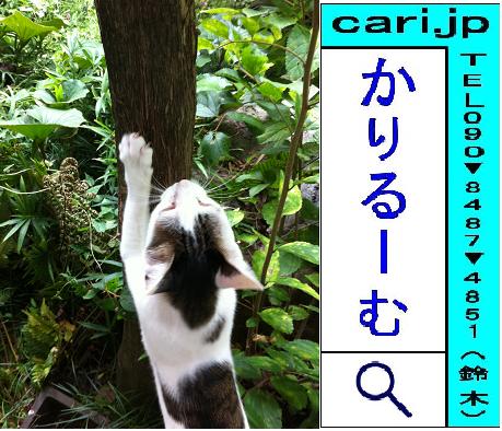 2011年09月19日(12時41分)A撮影写真 猫H