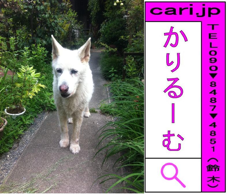 2011年05月17日(07時46分)A撮影写真 白犬S