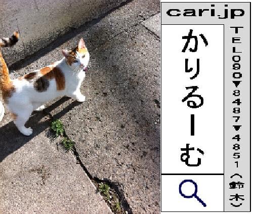 2011/06/27(08:34)A撮影写真 猫