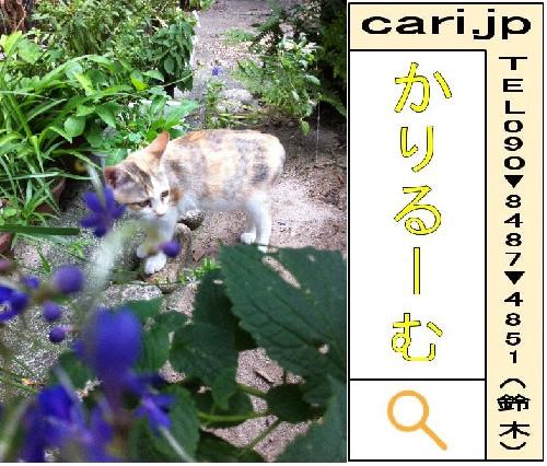 2011/09/30(09:42)A撮影写真 猫Y
