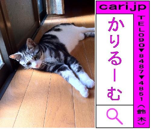 2011/07/16(07:39)A撮影写真 猫S