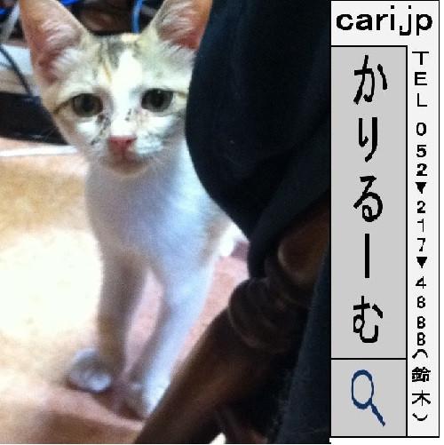 2011/09/02(09:06)A撮影写真 猫Y