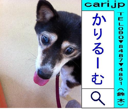 2011/12/30(10:21)撮影写真 犬M