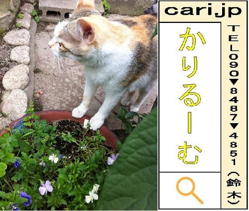 2012/6/25(16:15)撮影写真 猫Y