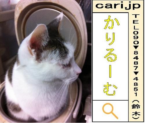 2011/12/06(09:28)撮影写真 猫H