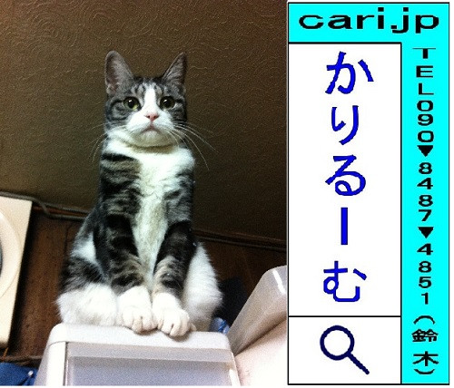 2012/12/17(18:03)撮影写真 猫S