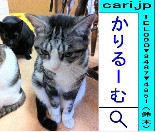 2011/12/12撮影写真 猫H・K・S