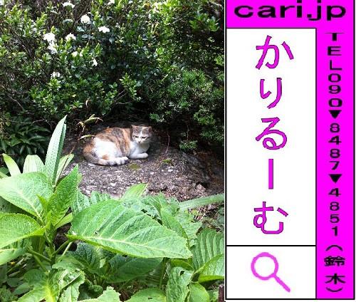 2012/06/02(16:15)撮影写真 猫Y