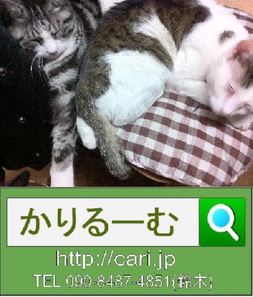 2012/03/04(13:56)撮影写真 猫S・H