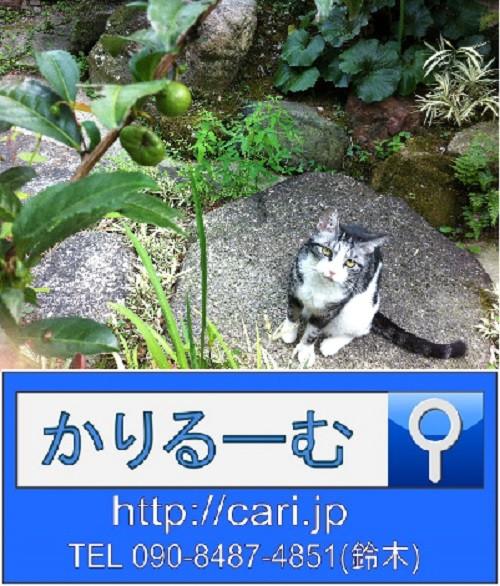 2013/09/09(15:59)撮影写真 猫S
