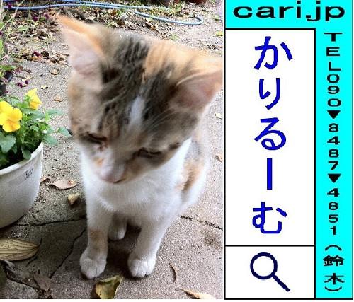 2011/11/18(11:58)撮影写真 子猫Y
