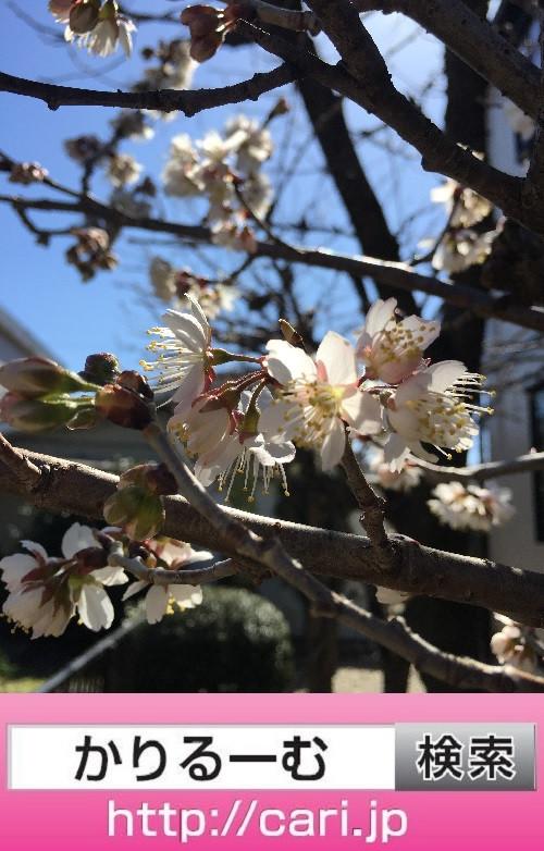 2018/03/06(12:48:00)撮影写真 春
