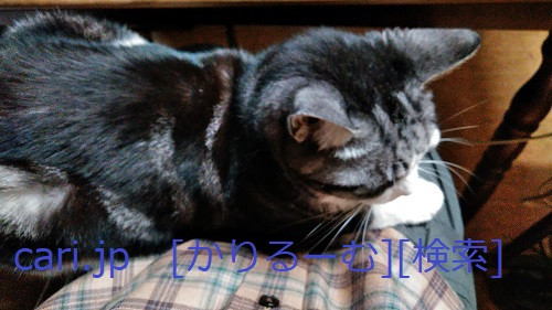 2018/12/01猫スズ(すず)の写真1812011919