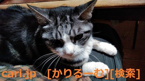2018/12/01猫すず(スズ)の写真1812011919