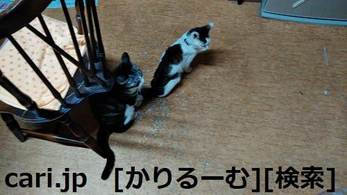 2018/12/01猫スズと猫ハナの写真1812011944