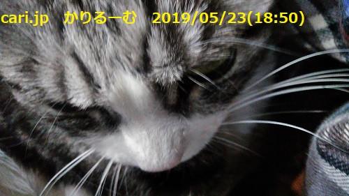 ハリーポッターと不死鳥の騎士団 【映画別英単語2019】