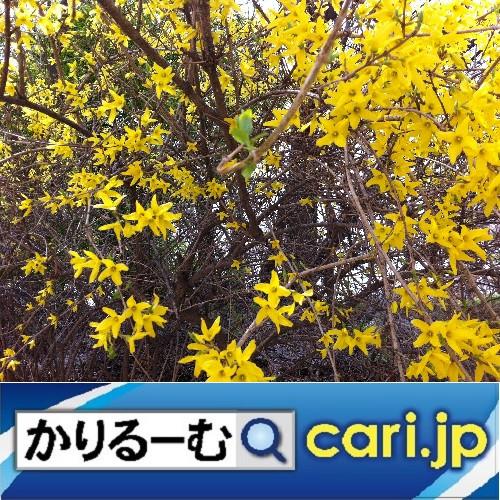 クリスマスミサを経験してみたい。 cari.jp