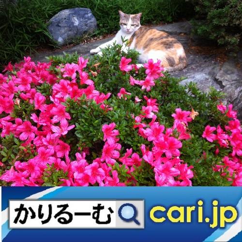 花のある暮らし 手作りインテリア cari.jp