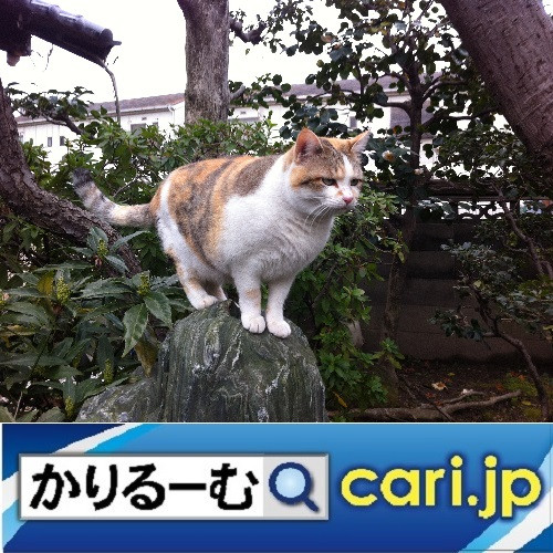 全国に広がる、コラボ店! cari.jp